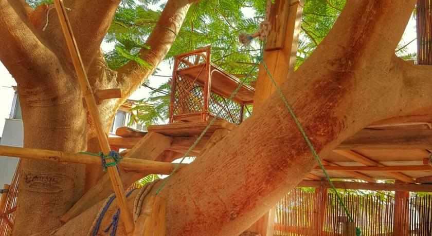 עץ טיפוס עמנואל דירות נופש